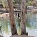 Manning River Campsite_3204