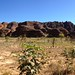 Panoramic Purnululu National Park