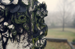 12/365 (moke076) Tags: old atlanta roses flower cemetery grave graveyard oneaday rose stone closeup georgia oakland carved moss nikon headstone foggy age photoaday gravestone granite colored lichen 365 marble 2015 project365 365project d7000