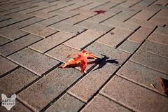 San Diego in Winter (RachelBrandtPhotography) Tags: street winter brick fall leaves leaf downtown seasons sandiego sidewalk gaslamp rachelbrandt rachelbrandtphotography