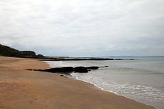 2016 - 16.5.15 Gullane Beach (15) (marie137) Tags: trees sea horses cloud sun flower castle beach dogs animals rock landscape sand berry ben bass harbour ruin gsd marie137