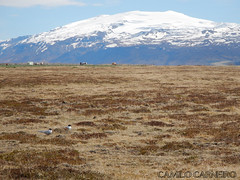 Arctic terns (Camilo C) Tags: sterna eyjafjallajkull paradisaea