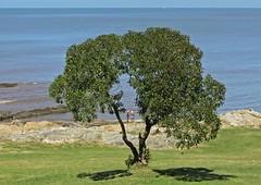 A traves de (carlos_ar2000) Tags: sea people naturaleza tree beach nature arbol uruguay mar gente playa montevideo buceo