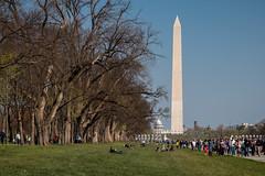 Obelisque et Capitole (Seb & Jen) Tags: usa washington districtofcolumbia unitedstates capitol obelisk capitole obelisque tatsunis