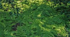 DSC_5072-Edit (Scottmh) Tags: gardens nikon royal australia melbourne victoria botanic d7100