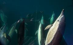 Manada delfines comunes Instagram
