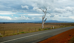 the lost highway (keith midson) Tags: road tree clouds landscape highway australia nile deadtree drought tasmania