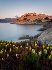 Calvi-Corsica (Ste.Viaggio) Tags: sunset sea landscape long exposure tramonto mare corsica olympus persone 24mm fiori vacanza paesaggio scogliera 2016 calv stevia80