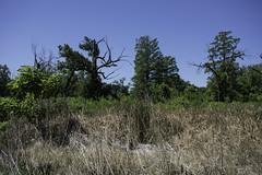 ForestPark_SAF4600 (sara97) Tags: nature outdoors bluesky missouri saintlouis forestpark citypark urbanpark photobysaraannefinke copyright2016saraannefinke