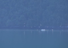 Awaiting the catch (PeterYoung1.) Tags: blue trees light nature water beautiful birds norway reflections boat fishing scenic atmospheric geiranger geirangerfjord