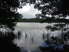 Am Kleinen See, Lbeck , NGID1556500341 (naturgucker.de) Tags: lbeck kleinersee naturguckerde cwolfgangkatz ngid1556500341