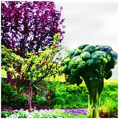 Brokkolibaum (stefanielaiminger) Tags: brokkoli bluthasel surreal weitwinkel brokkolibaum traumwelt surrealism