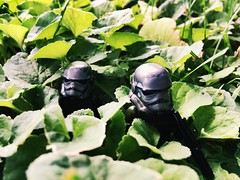 Stalking the deep brush (Kay The Warden) Tags: empire stormtrooper nature starwars lego trooper shadow brush