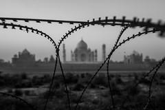 My Taj (Karthigesan Vijayakumar) Tags: taj tajmahal india heritage abstract blackandwhite incredibleindia lines blur wonder delhi agra rootsofindia natgeo natgeotraveller