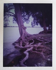 At Land's End & Yearning (dreamscapesxx) Tags: instant polaroid peelapart supershooter polaroid689film expired ontheedge atlandsend bythewater yearningtowardssomethingmore exposedroots kenthompsonpark sarasotafl snapitseeit