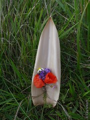 Le bouquet de Coralie (Manvieux, Basse-Normandie) (2015-09-04 -19) (Cary Greisch) Tags: france fleur calvados fra bassenormandie carygreisch manvieux