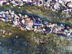 Rocky beach (jo.elphick) Tags: seashells beach sunset seaweed australia darkbeach nsw