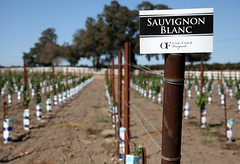 (ONE/MILLION) Tags: vacation travel tours visit oak ridge winery farm vineyards lodi visitor center grapes wine season crops signs williestark onemillion boats highway new old outdoors landscape colorful taste tasting california bird house grounds
