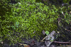 naturetextures4 (rcipfw) Tags: moss green nature texture plants plant life northmachester indiana