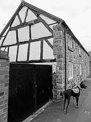 A random piece of timber frame (eucharisto deo) Tags: bw dog evie fachwerk timberframe tudor much wenlock tudorstyle blackandwhite bandw blackwhite timber frame timberframed
