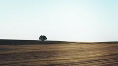 lone nature (MarcusWitte) Tags: natur stil nature tree baum feld wiese flat minimal dezent white weis gelb yellow