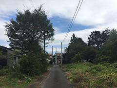 GREEN_OTA_028 (yabuki-keikanWS) Tags:   36