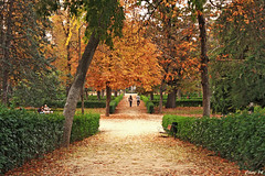 Beautifull Retiro (photoschete.blogspot.com) Tags: madrid park parque autumn color verde green fall colors yellow canon eos amarillo otoo retiro 1000d