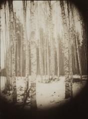 (NooFZz) Tags: bw landscape largeformat 9x12 photographicpaper petzval paperpositive bulldog4x5