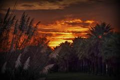 Plumeros y palmeras (Nati Almao1) Tags: viajeaplayacanela