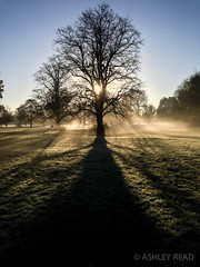 Beddington Park (im_ashleyread) Tags: park morning light shadow sunlight mist nature water beauty silhouette contrast river january warmth croydon sutton lightrays wallington beddingtonpark