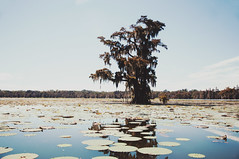 64 (kylen.louanne) Tags: portrait nature cat louisiana alligator gators bayou swamp cypresstrees lakemartin breauxbridge swampcat