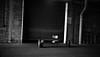 Roll 194 PanF plus313 (.Damo.) Tags: mamiya film blackwhite iso400 melbourne epson analogue ilford msm ilfordpanf panf homedeveloped ilfordpanfplus iso50 ilfordddx mamiya7ii filmisnotdead epsonv700 ilfostop ilfordrapidfixer patersontank 80mmf4 melbournesilvermine ilfordfixer selfdevelopedfilm samigonreels