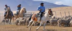 739 Gauchos (Docaron) Tags: santacruz argentina argentine estancia moutons pampa chevaux gaucho cavaliers dominiquecaron