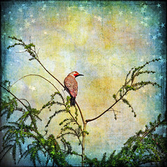 one bird (1crzqbn) Tags: color nature square stars textures flicker onebird 1crzqbn