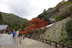 (ddsnet) Tags: travel plant japan sony cybershot autumnleaves  nippon   autumnal nihon  backpackers     rx10 osakafu