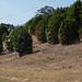 Trees_of_Loop_360_2014_097