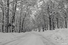 INVERNO (ilsannita) Tags: alberi strada explore neve inverno forcadacero