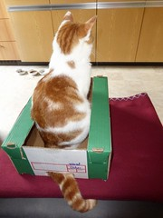 Mucky (anemone54) Tags: red green rot cat kitten box decke blanket katze grün kater karton schachtel hauskatze orangewhite zimmertiger rotweis