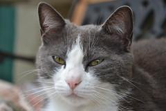 rosetta (ELENA TABASSO) Tags: cats animal animals cat gatto gatti animali animale