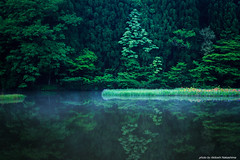 Quiet pond (nakashy) Tags: trees iris reflection tree green nature japan fog forest canon landscape pond canoneos5dmarkiii
