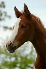 Life is Crazy (Heiko Schneemann) Tags: pferde foal fohlen lifeiscrazy