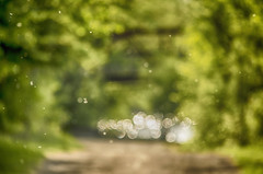 Pollinated Rain (flashfix) Tags: bridge trees ontario canada green nature spring nikon bokeh ottawa pollen naturetrail 2016 rockcliffeparkway d7000 55mm300mm 2016inphotos may272016