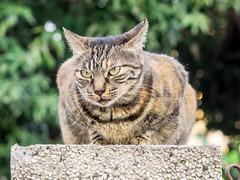P4085795 (daisuke1230) Tags: cat olympus neko em  m43