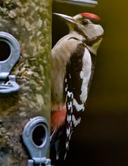 woodpecker (jjays7155) Tags: blashfordlakes eos7d ef400f56