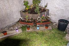 flo 10 (pamelaadam) Tags: thebiggestgroup fotolog digital autumn october 2015 work youthwork ellonparishchurch churchofscotland ellon aberdeenshire scotland