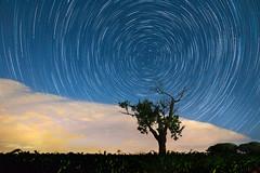 4000 seconds (keko-photography) Tags: nacht nicht baum tree stars sterne blau licht blue startrail light