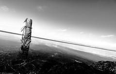 laisser glisser le temps (glookoom) Tags: bw blanc blackandwhite black bokeh bois contraste lumire landscape light ligne mer paysage nature eau extrieur effet