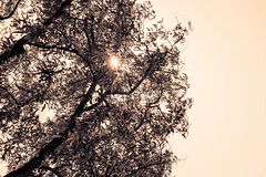 (Carrie Gong Photography) Tags: sun shine tree