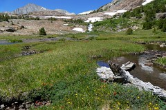 Colorful wildflowers along stream below waterfall (openspacer) Tags: inyocounty inyonationalforest
