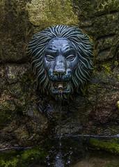 Lion (Delfinibi) Tags: olympusepl5 olympus olympusm1442mmf3556iir lion oroszln mzuiko magyarorszg ungarn hungary forrs vz water balaton gyenesdis stone fountain summer nyr